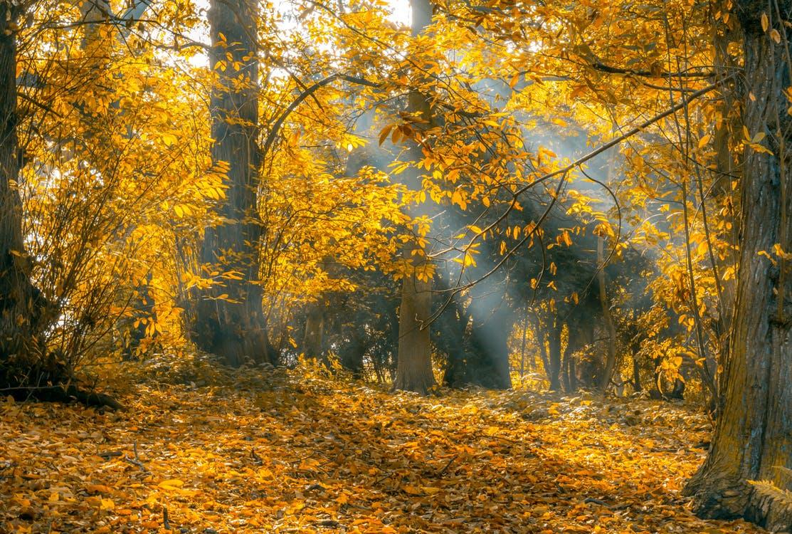 Datum för höstens naturvårdsdag – 3 oktober