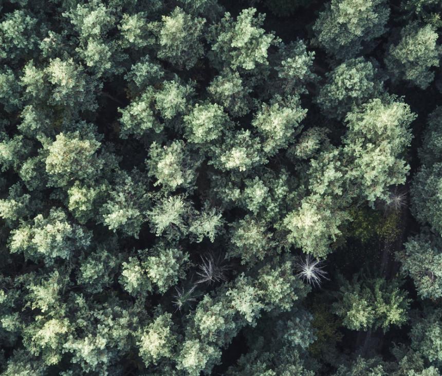 Stor fällning av riskträd på LFTs mark mellan Gul och Röd väg mot vattnet